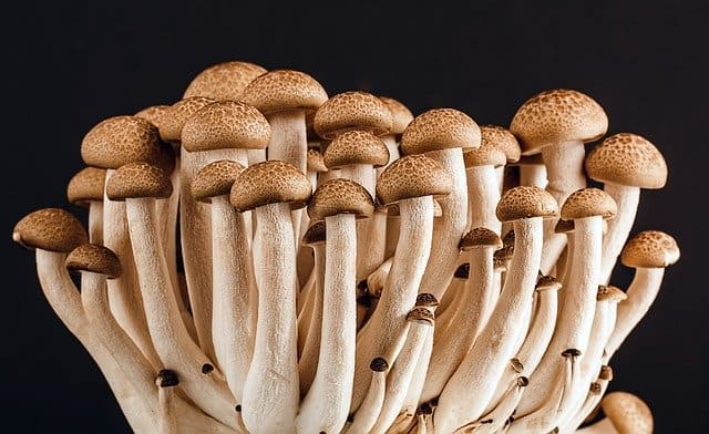 grow tent mushrooms