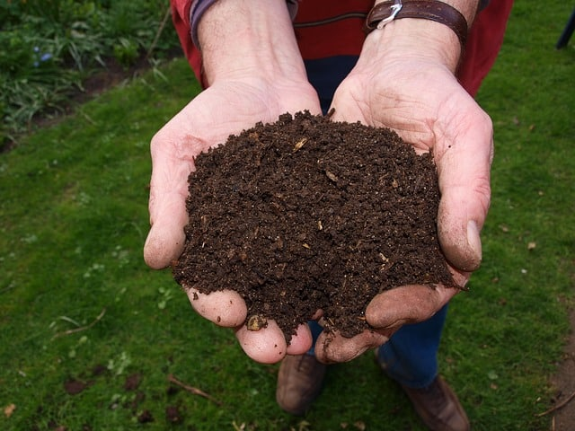 mushroom substrate compost held in hand