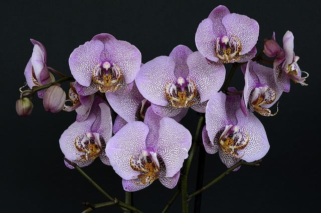 how to grow a orchids indoor